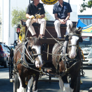 Horse of the Year Street Parade 2014